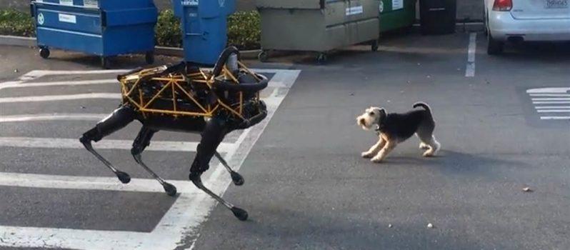 REAL DOG VS ROBOT DOG