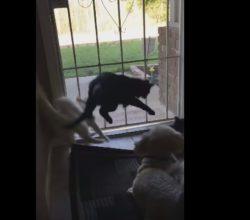 Dog Terrifies Cats Stalking Bird