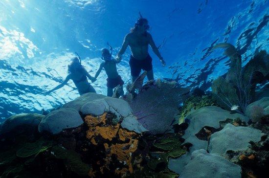 india-scuba-explorers