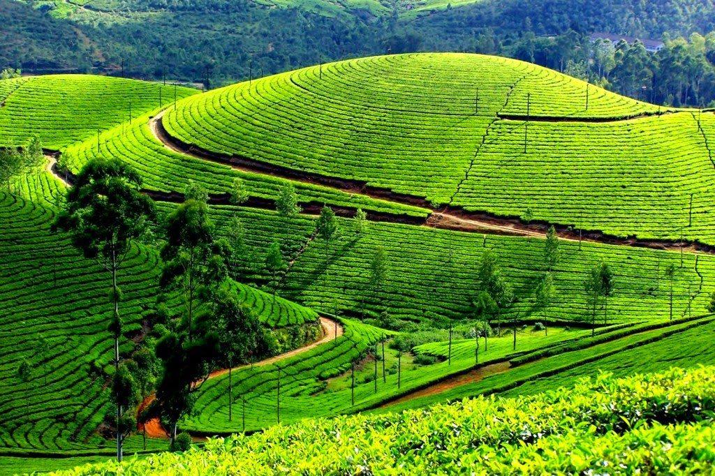 kerala-munnar-kolukkumalai-tea-estate