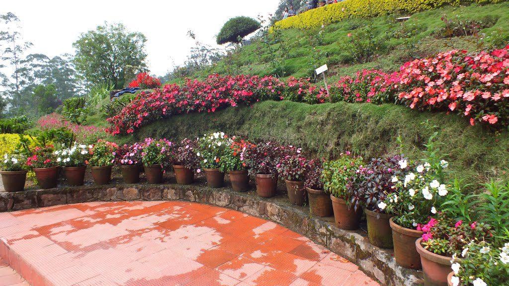 kerala-munnar-rose-garden